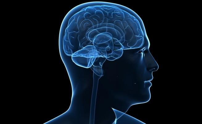 Големият мозък не прави човек по-умен