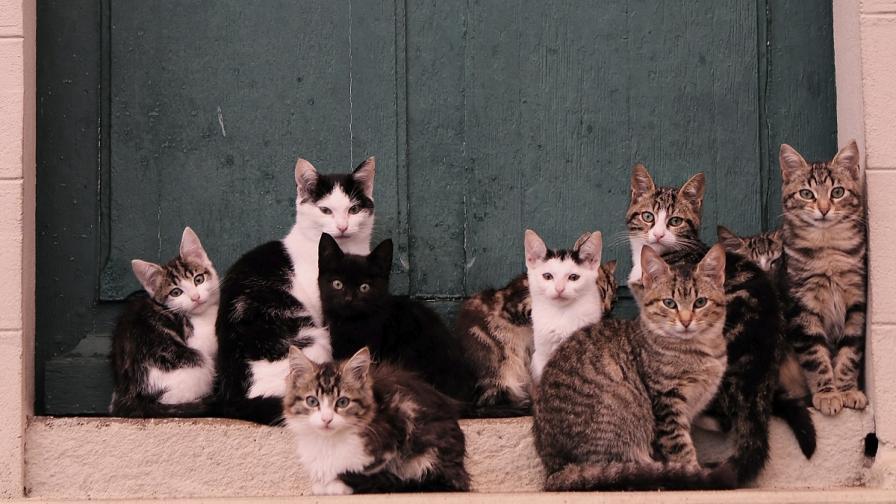 Япония има 10 котешки острова