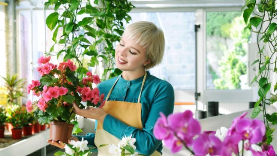 Законите на пресаждането на цветя