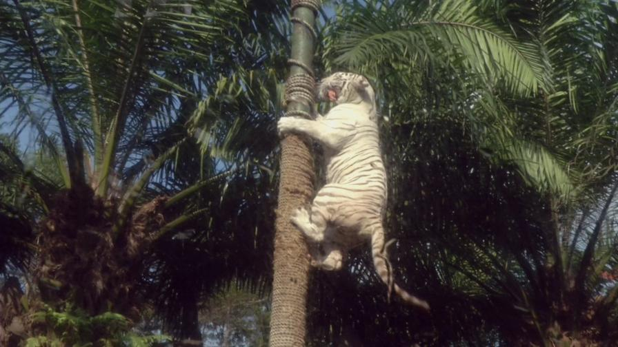 "Бели тигри и необичайно сафари в ""Без багаж"""