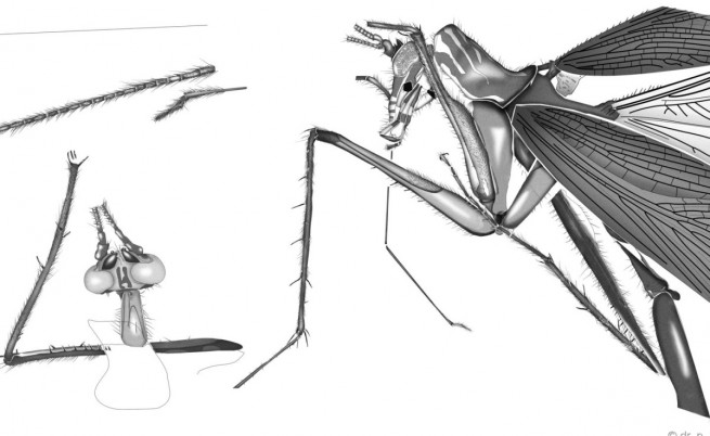 Рисунка на новият вид хлебарка