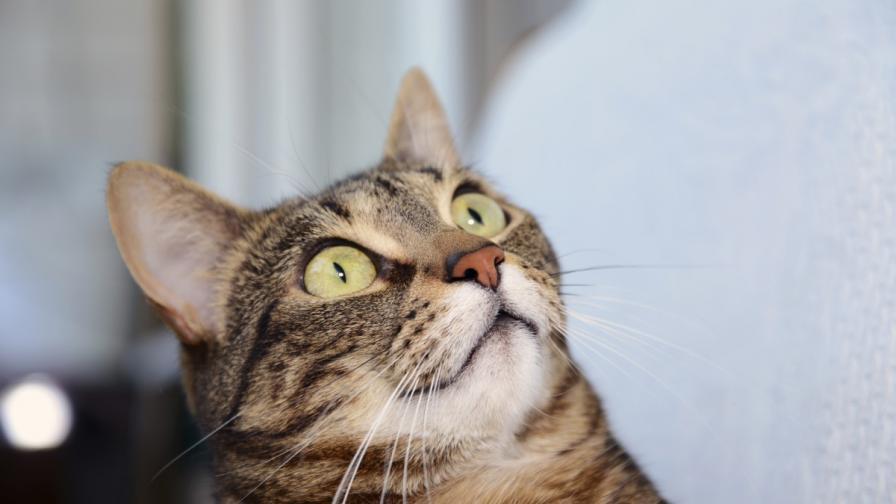 Котките се осланят на зрението си, когато търсят храна
