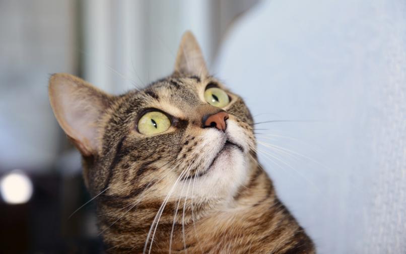 котка поглед