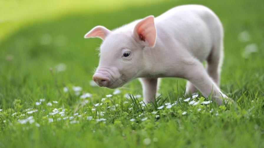 Кои са десетте най-умни животни (видео)