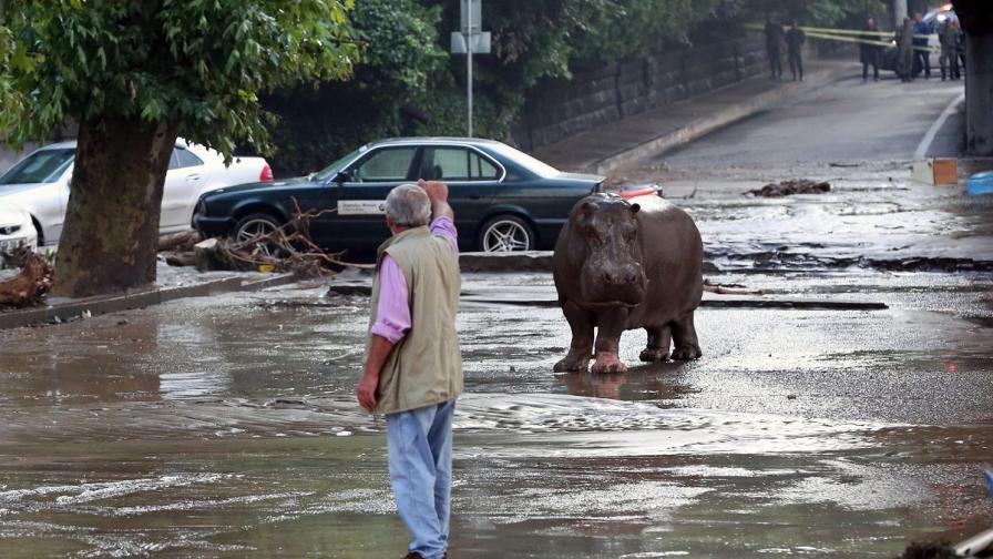 Буря взе жертви в Тбилиси, животни избягаха от зоопарка