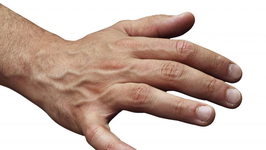 По дължината на пръстите ще познаем мъжа