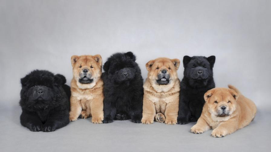 Китаец гледал черни мечета, мислил ги за кучета