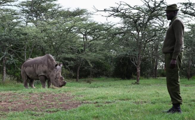 Судан с един от рейнджърите, които го пазят