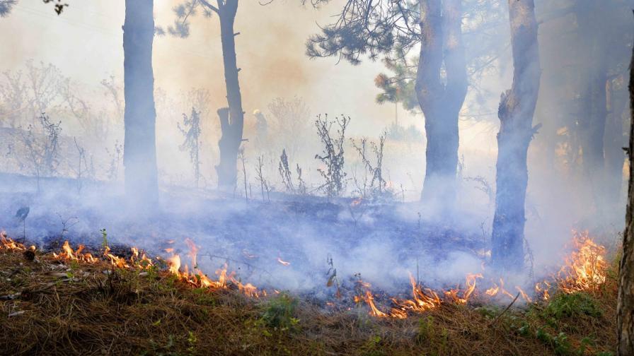 Пламна пожар край Драгоман