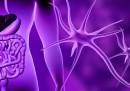Революционно: Учени откриха нов орган в човешкото тяло