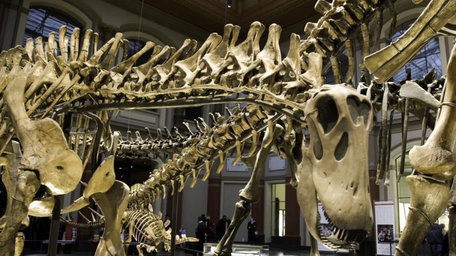 Пет неща, които не знаете за динозаврите (видео)