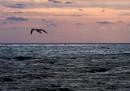 """Морето изхвърли тялото на момиче на """"Слънчев бряг"""""""