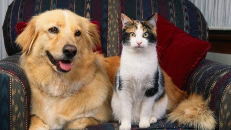 куче котка домашни любимци