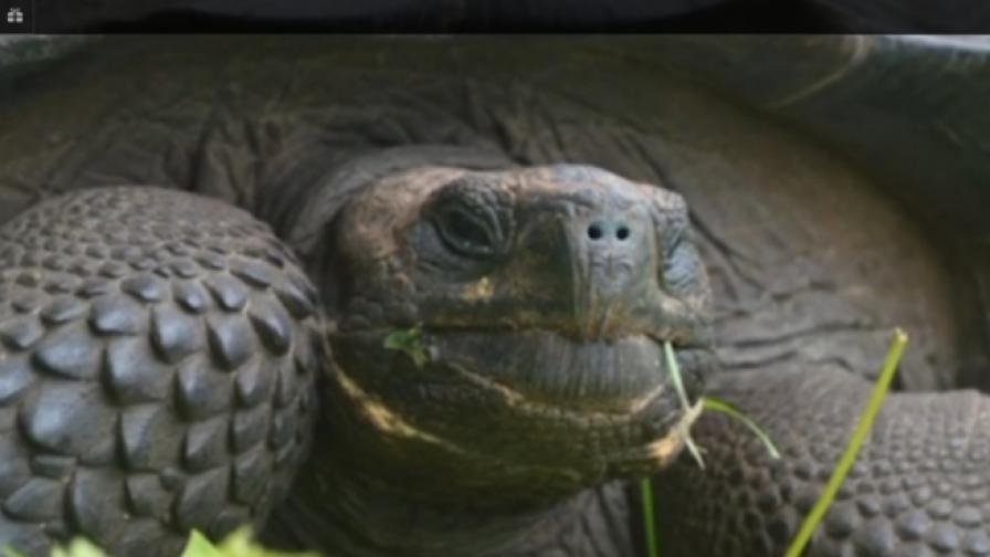 Учени откриха нов вид костенурка гигант (видео)