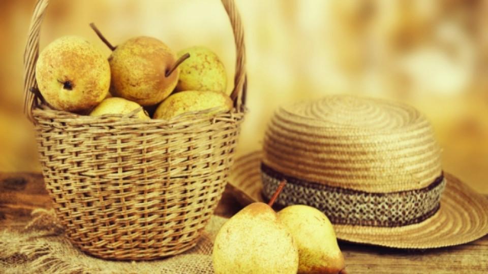 Крушата – плодът на есента