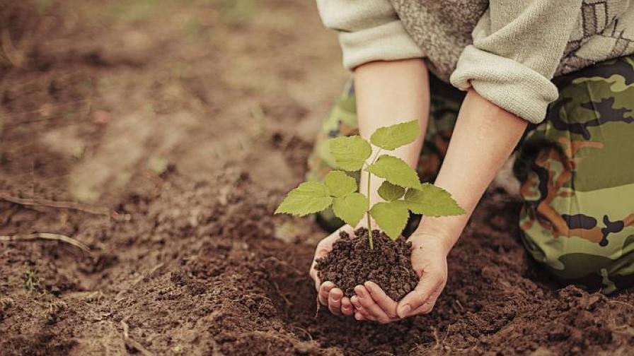 7-годишно дете изкоренило 200 дръвчета в Батак