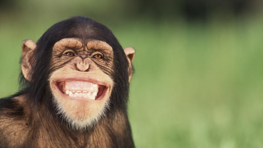 Палави животни събират погледите (видео)