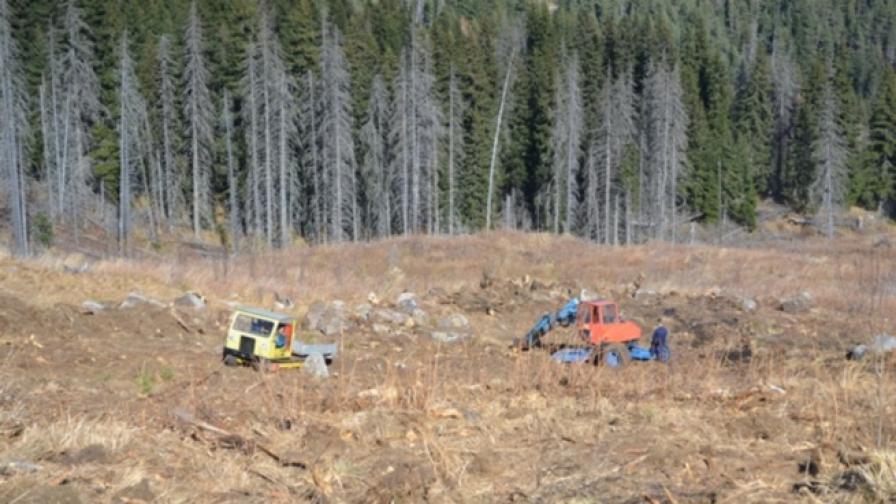 Започна разследване за изсечената гора на Витоша
