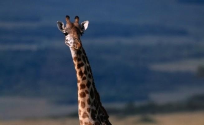 Едни от най-любимите животни може да изчезнат