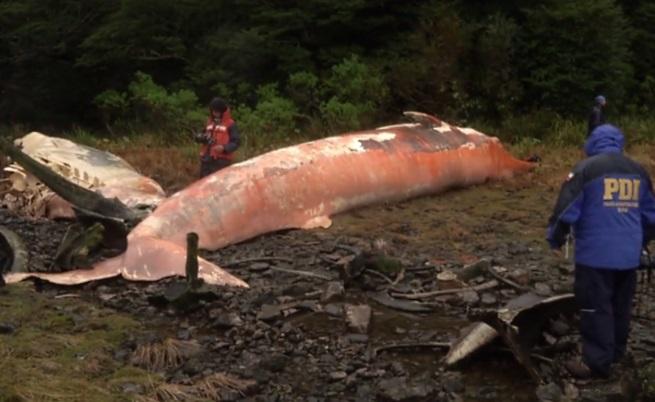 Над 300 мъртви китове по бреговете на Патагония