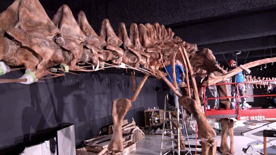Вижте най-големия скелет динозавър в света