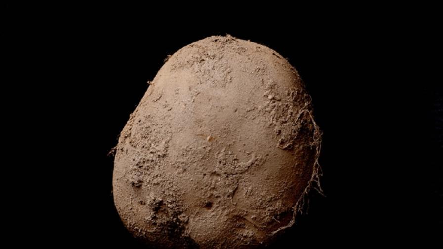Снимка на картоф беше продадена за 750 000 лири