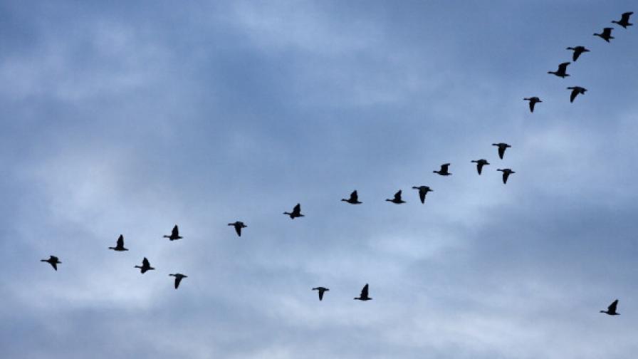 Птиците, които мигрират в Африка - най-добрите певци