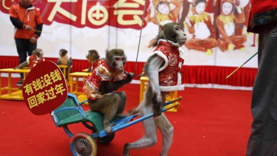 Конфликти и помирения в Годината на маймуната