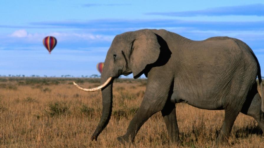 Слон с разбито сърце унищожи 20 коли в Китай
