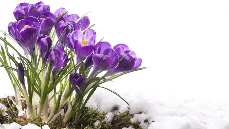 Астрономическата пролет у нас настъпва със слънце