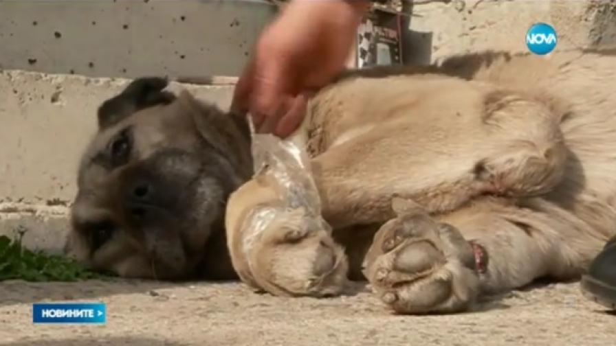 Арестуваха мъж, помогнал на куче, влачено от автомобил