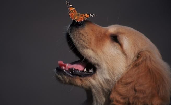 10-те най-умни животни на планетата