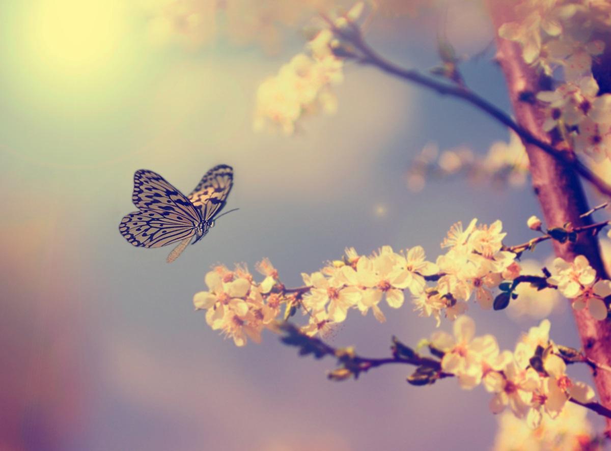 Пеперудите пият сълзи, защотоне могат да си добавят достатъчно натрий от цветята. Затова понякога пият сълзите на другите животни. Предпочитат най-вече костенурките, тъй като те са особено бавни, но не отказват и крокодилски сълзи.