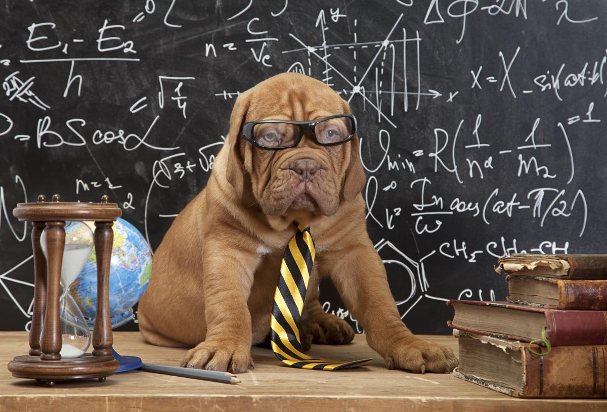 Въпреки че виждат по-малко цветове от нас, кучетата имат по-добро зрение от хората. И още един бонус факт - щастливитекучетамахат опашките си надясно, а когато са тъжни – наляво.