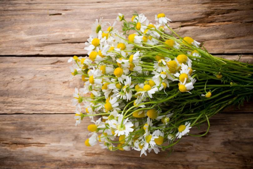 <p><strong>Лайка</strong></p>  <p>Лайката е лечебно растение, което се използва често при различни заболявания. Чаша чай от лайка може да има успокояващ ефект върху храносмилателния тракт. Ако имате алергия към амброзия, не използвайте лайка.</p>