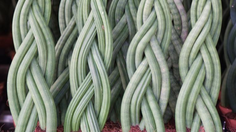Растения за по-добър сън
