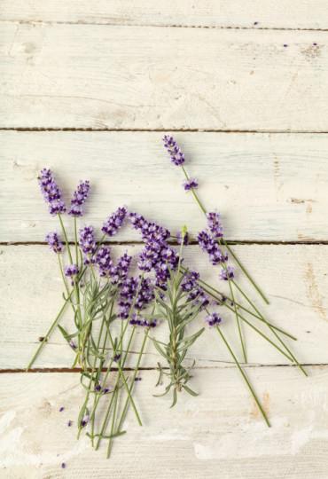 Лавандула: Може би едно от най-ефикасните растения, които се използват за лечение против безсъние. Лавандулата намалява тревожността, забавя сърдечния ритъм и понижава кръвното налягане.Пазарът изобилства от медикаменти базирани на екстракт от лавандула, ароматни маски, мехлеми и т. н., дори се предлагат и лавандулови матраци. Може би за вашата спалня просто трябва да се доверите на една лавандула поставена в саксия.
