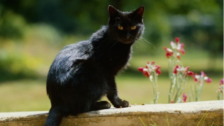 черна котка петък 13
