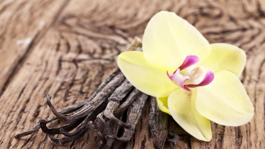 Черното цвете - за сексуален апетит и срещу стрес