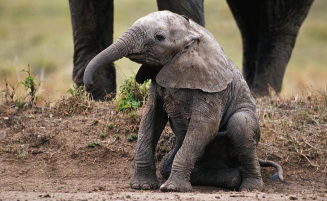 Индийци спасиха бебе слонче от шахта