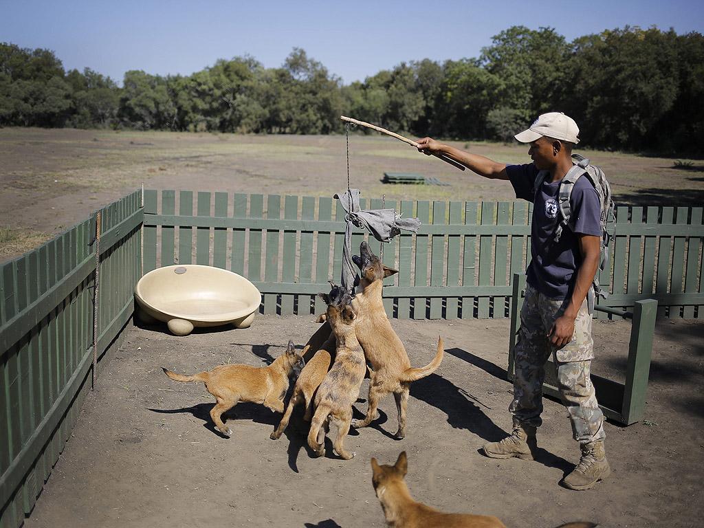 Инициативата на семейната фондация Ichikowitz вижда кучета и използването им от специалните части, като част от опита да спре вълната от бракониерството в Южна Африка и други африкански страни през последното десетилетие.
