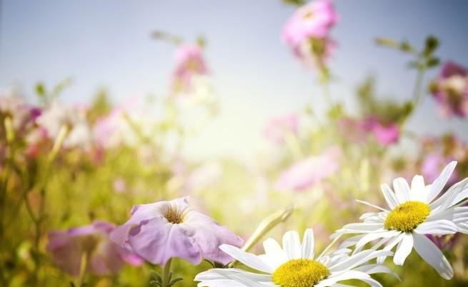 Кое цвете ви подхожда според зодията