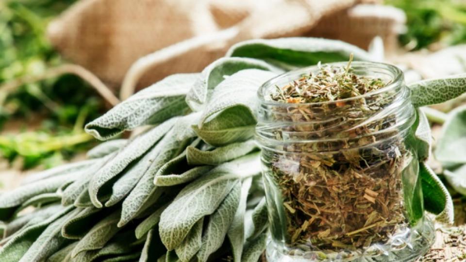 Рецепти на баба Ванга за болести, започващи с П