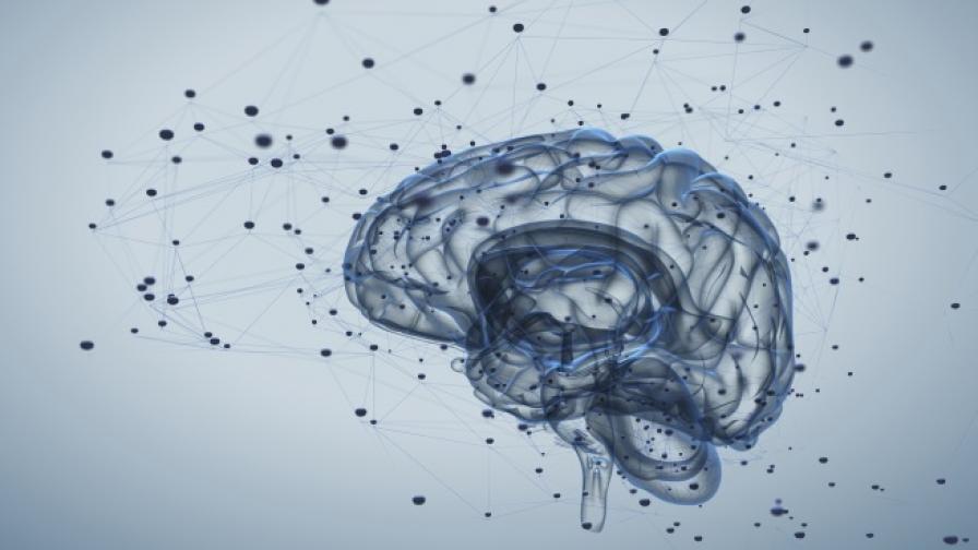 Мозъкът работи и след смъртта
