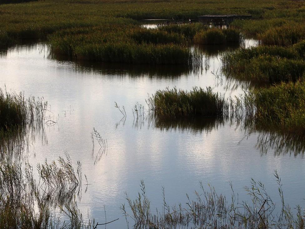 """- Природозащитен център """"ПОДА"""" е разположен южно от Бургас, северно от кв. Крайморие и източно от пътя Бургас-Созопол."""