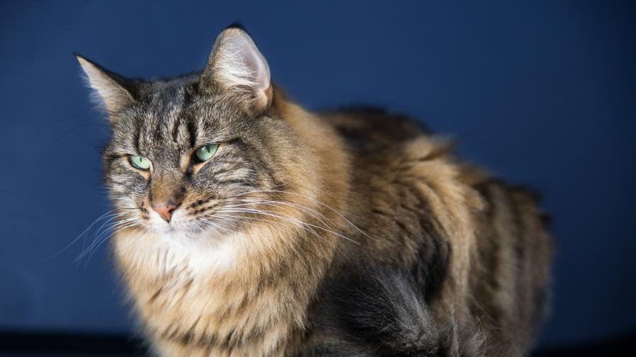 Защо котките имат грапав език