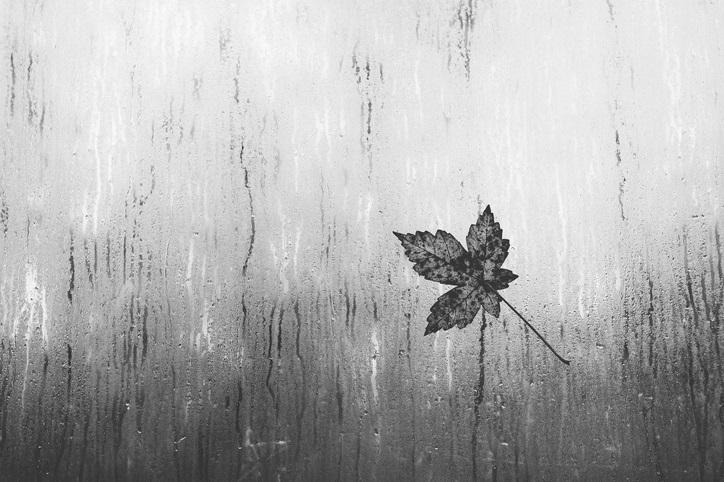 есен дъжд листа