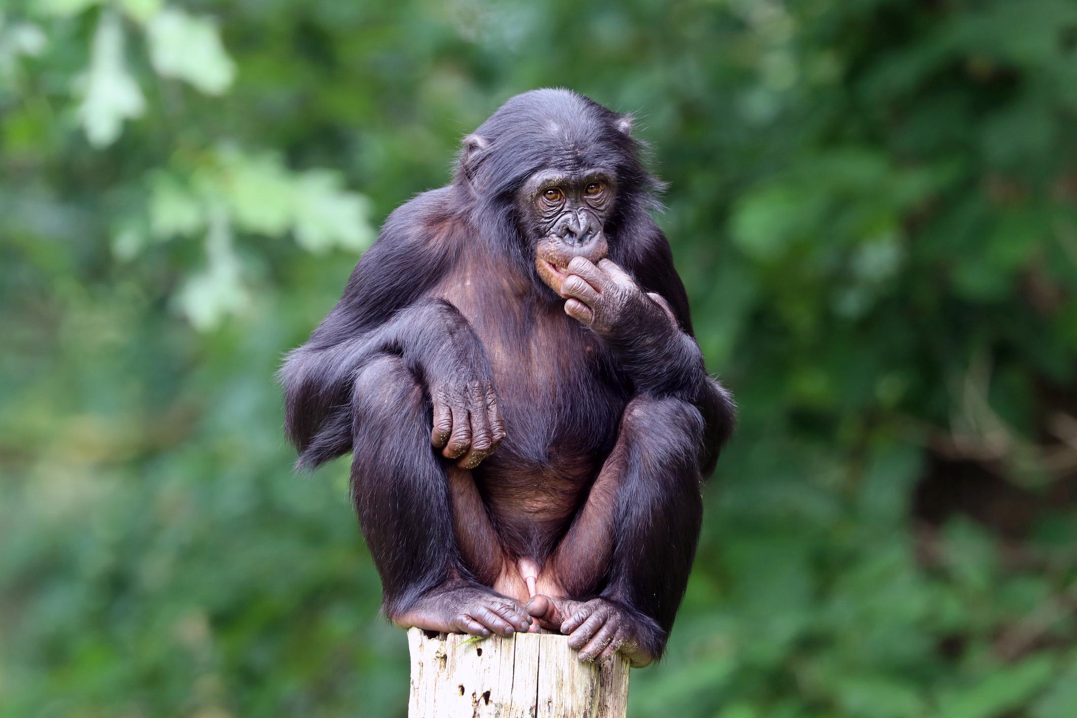Други примати обаче, като бонобото и западната горила, са изключително миролюбиви. Много нисък процент на убийства има при индийските носорози, тигрите, африканския слон и прилепите вампири. Животни като зебрите и газелата на Томпсън и някои видове прилепи въобще не се избиват.