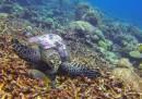 Подводният свят край Малдивските рифове