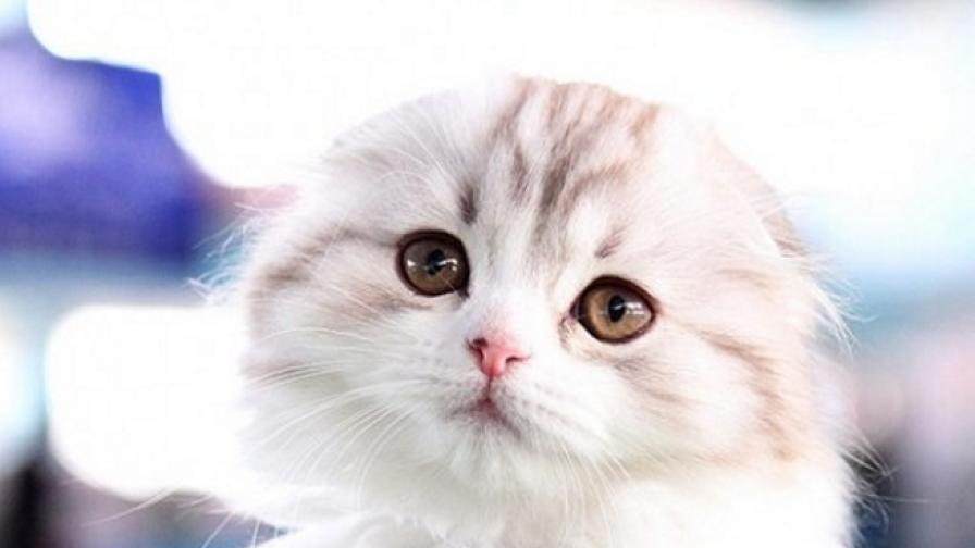 Редки породи котки в специална изложба